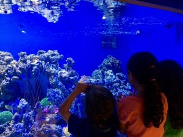 aquario_marinho_do_rio04