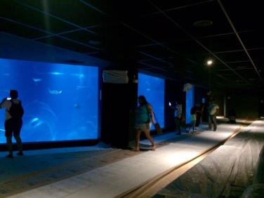 aquario_marinho_do_rio06