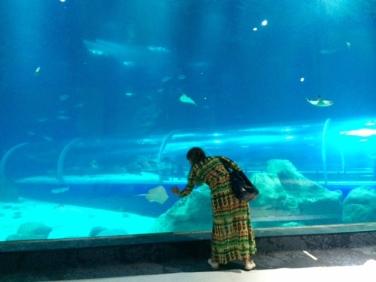 aquario_marinho_do_rio08
